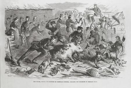 Pig Leslie 1859.png